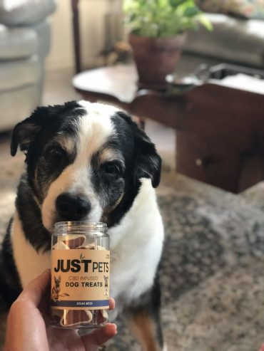 JustCBD Pet Treats: The Future of CBD Is In Their Paws
