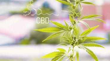 Can CBD Really Help Us in Improving Focus and Concentration?